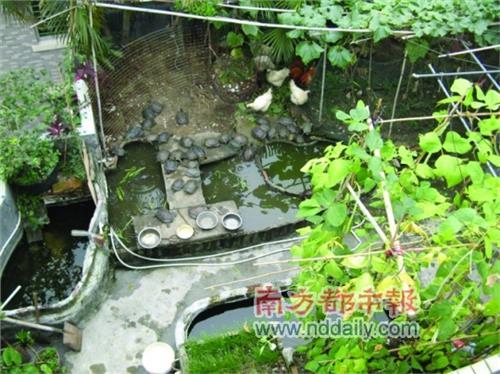 【生态龟池设计】同程底滤+垃圾桶过滤 小型生态龟池规划设计图