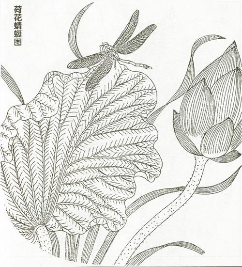 白描花卉临摹图片 花卉速写临摹图片 白描图片花草