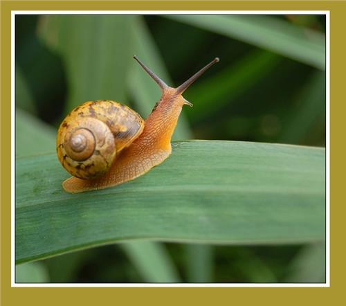 蜗牛要一直放在水里吗?它吃什么呢?