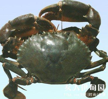 锯缘青蟹养殖技术|养殖24青蟹笼图片|青蟹白对虾养殖技术