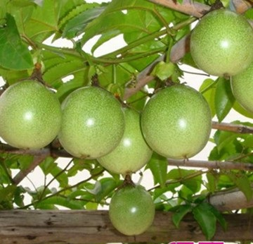 百香果种植成本多少