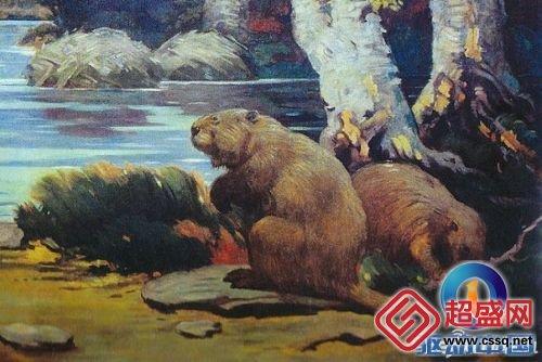 巨型树懒_犰狳的祖先是什么动物_飞扬123