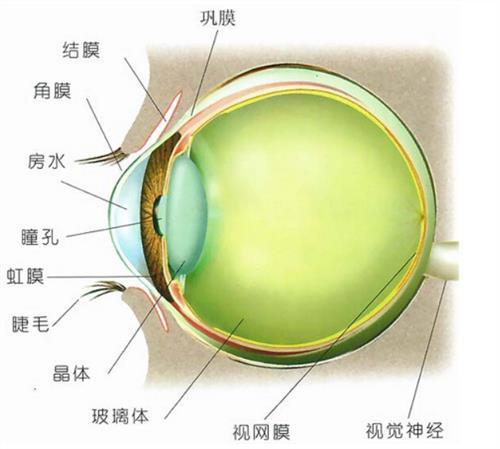 【王昱珩眼睛的科学解释】王昱珩眼睛能治好吗