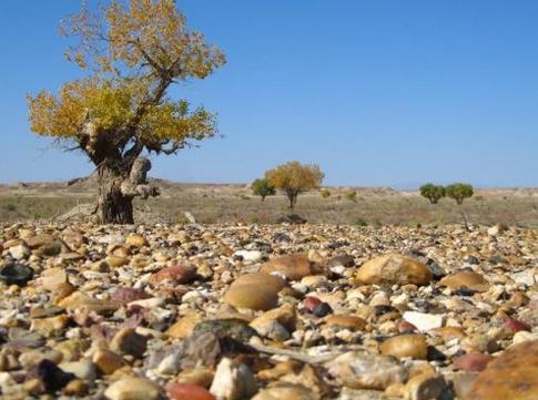 【戈壁滩捡石头的技巧】新疆戈壁滩捡石头历程