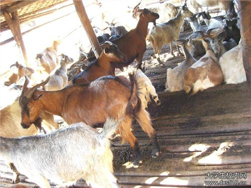 2016年广西省养殖业优惠政策 广西省畜牧发展扶持项目实施方案