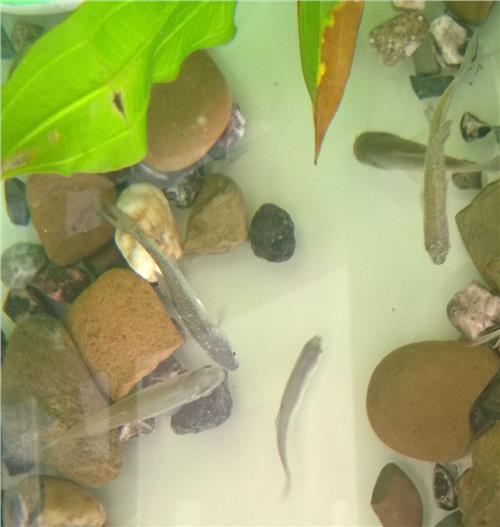 鱼缸里的水多长时间换一次 换多少 养的是热带鱼