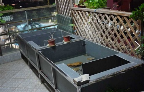 阳台养龟池设计图