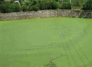 死水池塘一亩养鱼多少 北方五亩死水鱼塘四米深养鱼一年能赚多少钱
