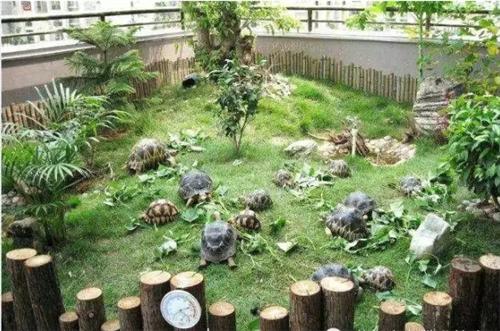 【楼顶养龟池建造设计图】阳台养龟池设计图