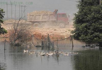 【一亩鱼塘养鱼赚多少钱】死水池塘一亩养鱼多少一年能赚多少钱