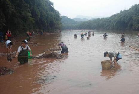 """泸州上演""""疯狂的石头"""" 上百人河滩挖透光鹅卵石"""