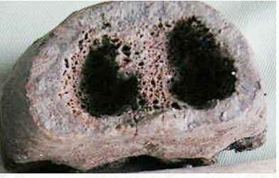 【虎骨手链的鉴别】虎骨佛珠的鉴别 虎骨鉴别图片