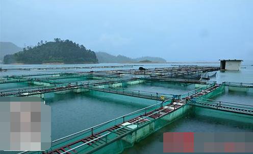 鱼塘养鱼赚钱吗 一亩鱼塘养鱼成本