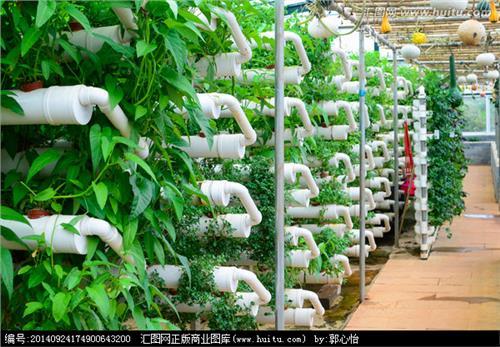 【水培蔬菜一亩投资多少】全市首个立体水培蔬菜基地建成(图)