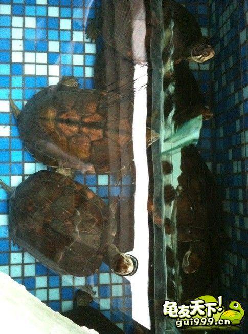 黄缘龟池设计图 12个人工龟池设计案例欣赏(转发收藏)