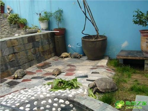 黄缘龟池设计 龟友的龟池设计图