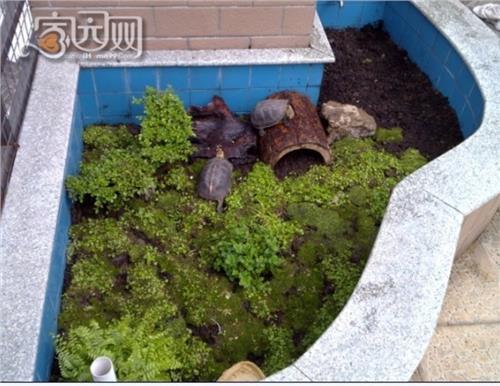 黄缘龟只要吃什么为主 黄缘龟为什么这么贵 黄缘龟对地区气候有要求
