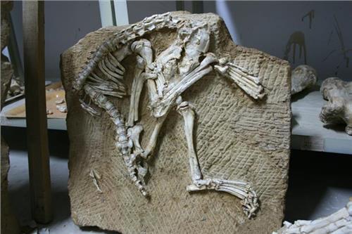 植物化石拍卖 上海植物化石新拍卖报价