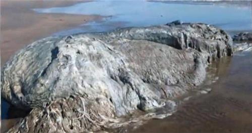蛟龙号发现的恐怖生物 人类曾在海滩上发现的10个神秘恐怖生物 看完头皮发麻!