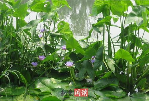 铁茉莉什么时候开花 兰花为什么不开花(经验篇):五种原因的详细介绍