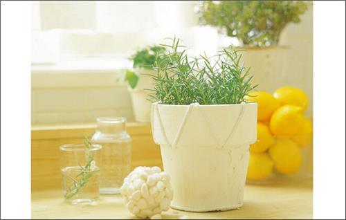 盆栽水果种植方法 小盆栽:芒果盆栽种植方法分享