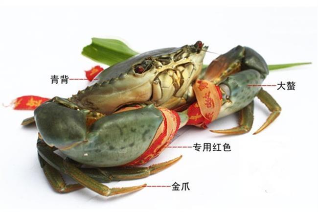 锯缘青蟹养殖 锯缘青蟹笼养技术 原理与箱式养蟹相类似