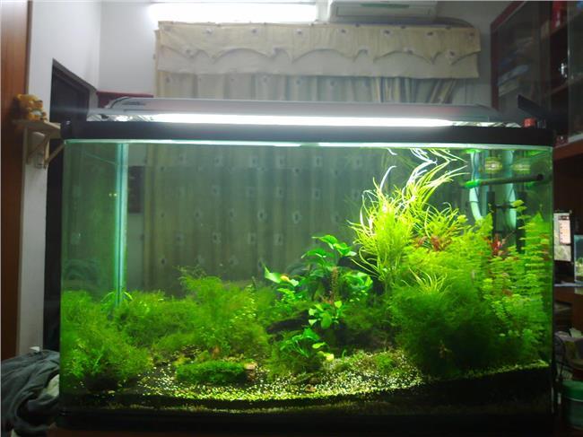 热带鱼鱼缸放什么水草 有谁了解一般鱼缸放什么水草好
