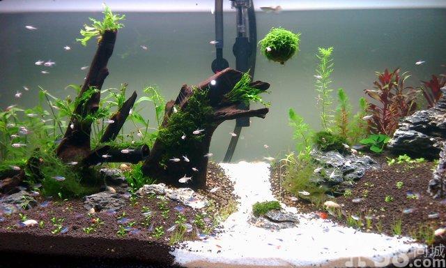 热带鱼鱼缸里放水草好 鱼缸里放水草对鱼好吗