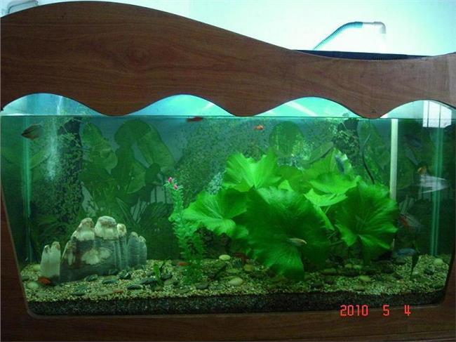 热带鱼鱼缸配置 热带鱼鱼缸的水草这么配置?要注意什么问题?
