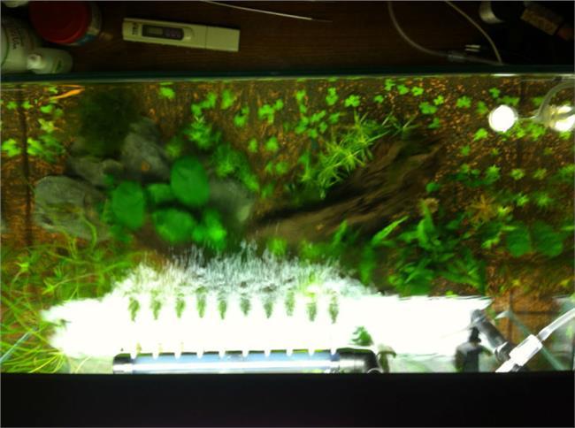 热带鱼鱼缸怎么换水 热带鱼缸里的水草怎么养