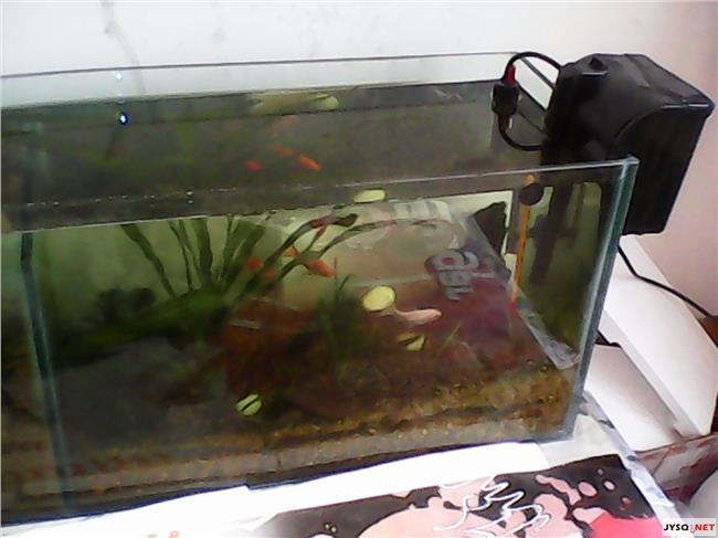热带鱼鱼缸里放盐 我养热带鱼`怎么老死啊``往鱼缸里放点盐对鱼好吗?