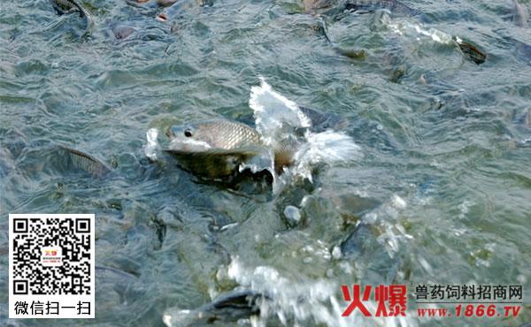 农村养鱼一年赚多少钱 养鱼赚钱吗 养鱼一亩能赚多少钱