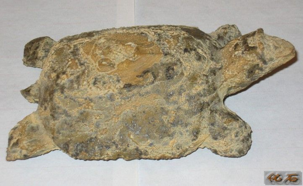 值钱的石头图片 乌龟化石值多少钱 值钱的石头化石图片