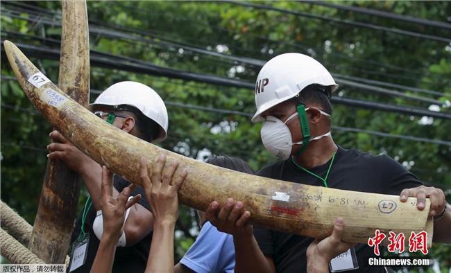 越南象牙制品 2015象牙多少钱一克 走私30公斤象牙制品 走私象牙多少会判刑