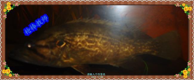 龙鱼混养打架解决办法 解决大型热带鱼混养打架的方法