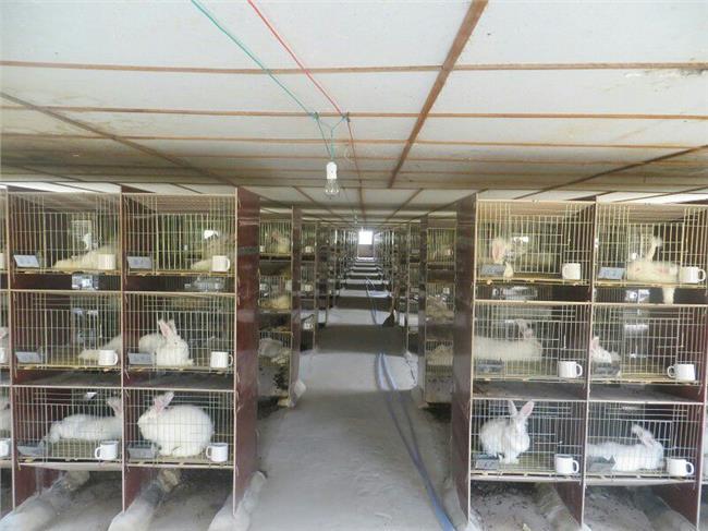 鹌鹑养殖利润计算 肉兔养殖利润是多少 养兔成本计算
