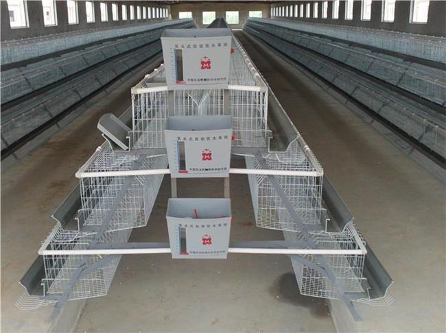 鹌鹑养殖方法 鹌鹑养殖笼具制作方法