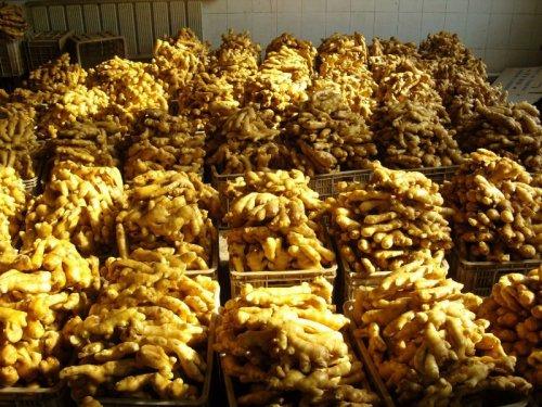 2017年生姜种植前景 2015年生姜种植前景分析预测