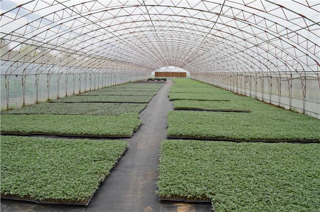 蔬菜利润多少 【豆角大棚蔬菜种植利润分析】蔬菜豆角大棚一亩地一年纯利润是多少