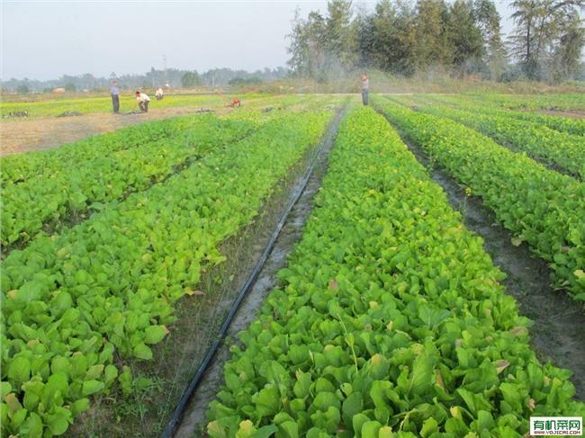 蔬菜利润有多大 有机蔬菜成本大利润少 绍兴诸多超市撤柜