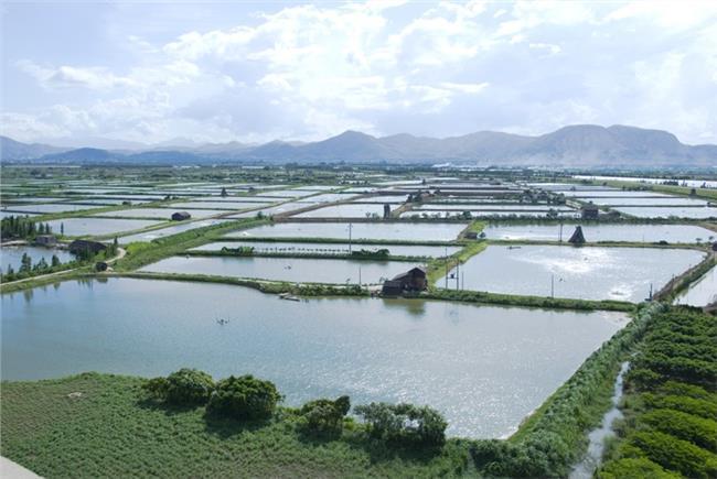 鱼塘养殖经济鱼 农村特色经济之鱼塘养殖