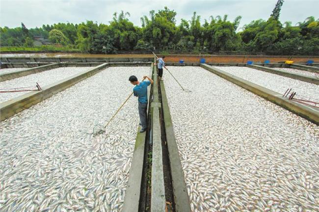 农村鱼塘养殖图片 一亩鱼塘养鱼赚多少钱 农村养殖鱼塘设计图片