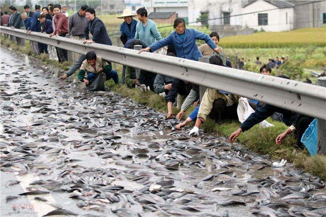 鱼塘养殖效益 池塘草鱼鲫鱼鮻鱼混养鱼体生长速度与经济效益分析【推荐】