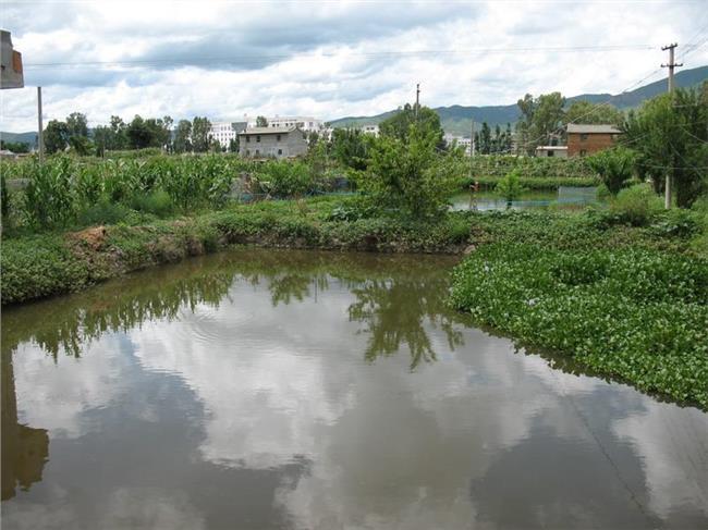 农村鱼塘养殖 农村新挖池塘养鱼 关于承包农村鱼塘养鱼系列问题!