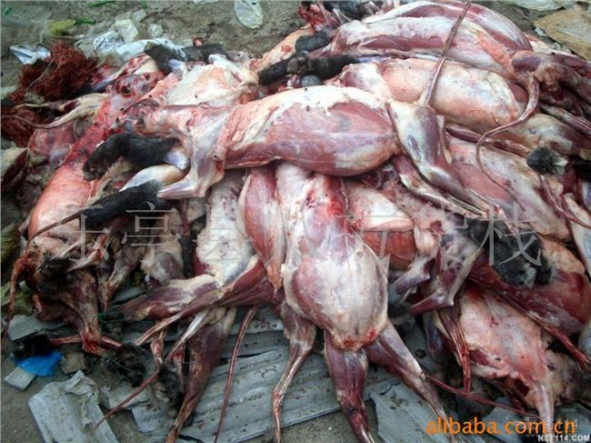 鱼塘养殖补贴 梅花鹿养殖河北承德农民特种养殖成功梅花鹿养殖补贴多