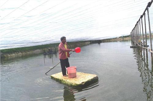 鱼塘养殖价钱 鱼塘养鱼赚钱吗 一亩鱼塘养鱼成本