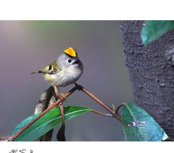 贝子鸟饲养 贝子鸟冬天怎么养 - 互联新闻 - 幼儿园
