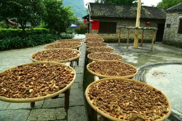 黄精种植产量 【黄精种植亩产量】一亩地种植黄精能有多少产量