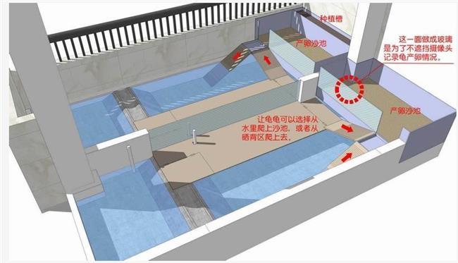 石金钱龟池设计图南阳台池设计图实景石龟uiv阳台作品集毕业图片