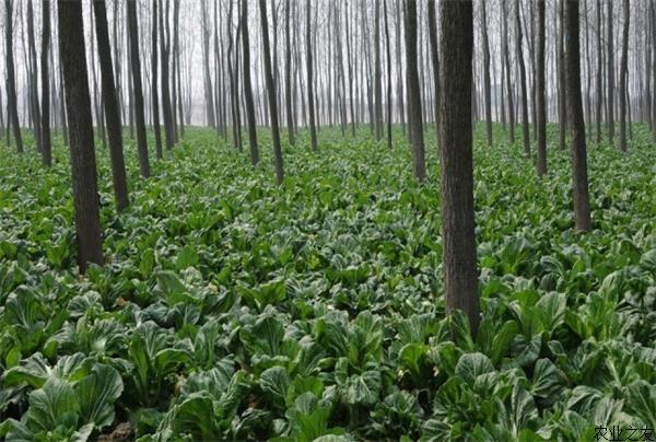 林下养殖模式 林下种养什么最赚钱:七种林下种养殖模式 总有一种适合你